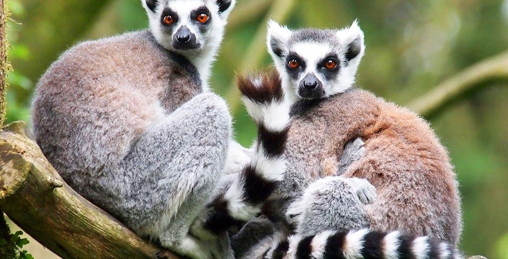 Esplorate i dintorni come la riserva naturale di Lokobe