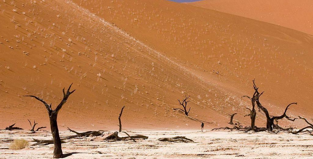 Giungendo al deserto del Namib