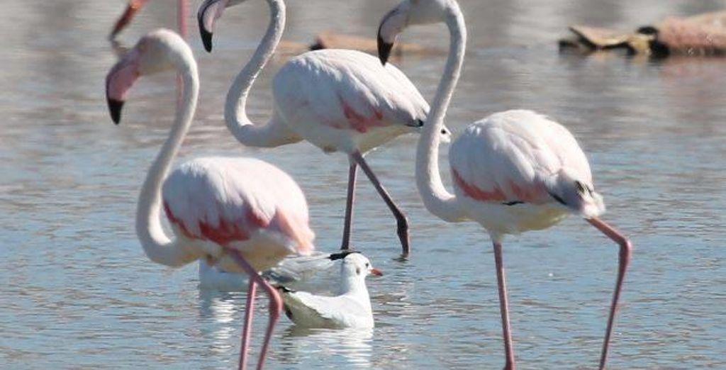 Potrete ammirare i voli dei tanti uccelli migratori