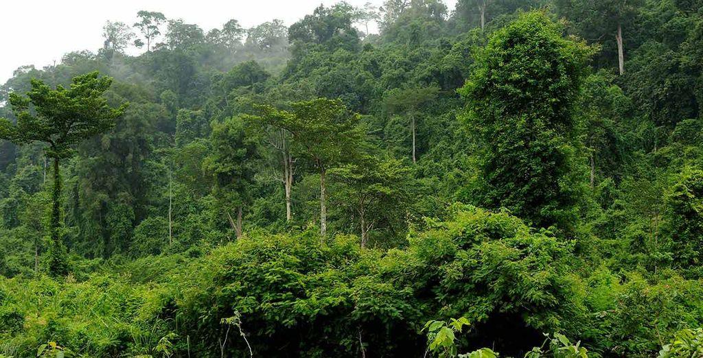 Godetevi lo spettacolo di un'escursione nella giungla tropicale, un'esperienza unica