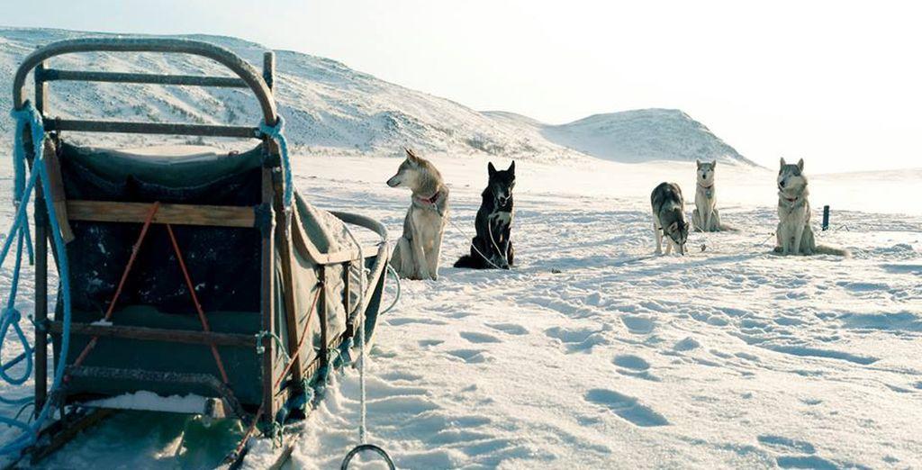 Viaggate attraverso queste terre con un safari con gli husky