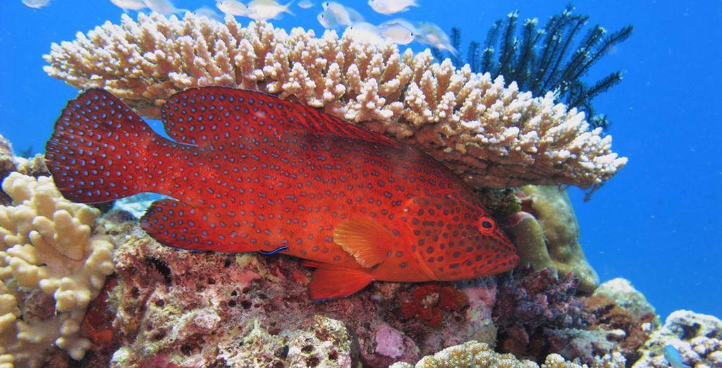 Un mondo di rara bellezza con una varietà di coralli, mante, tartarughe marine e pesci multicolori