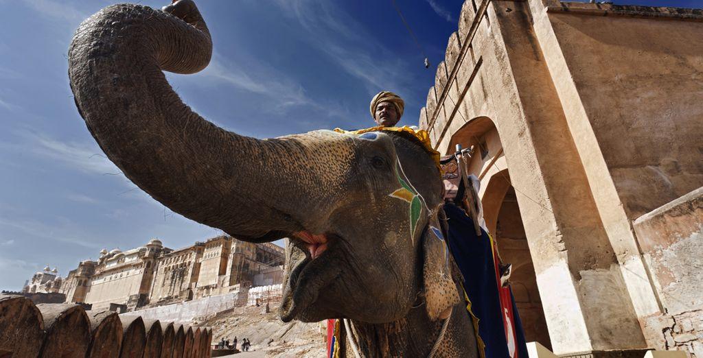 Visiterete anche la fortezza, giungendovi a dorso di elefante