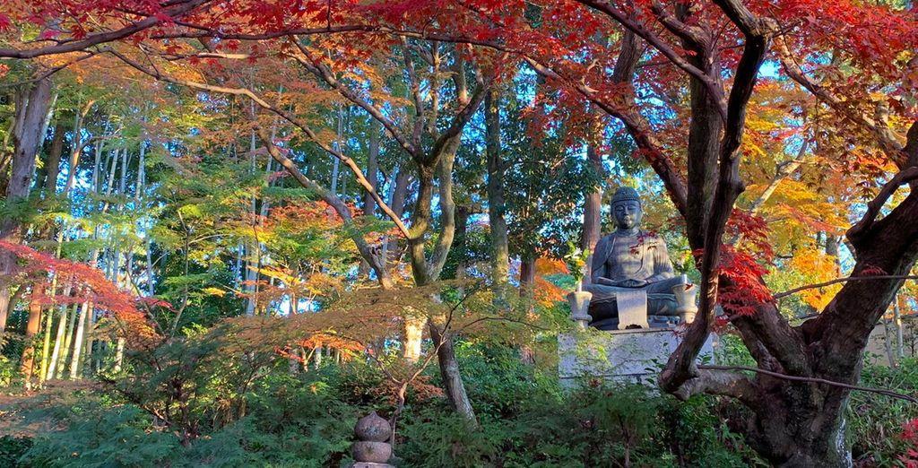 Foreste e templi giapponesi