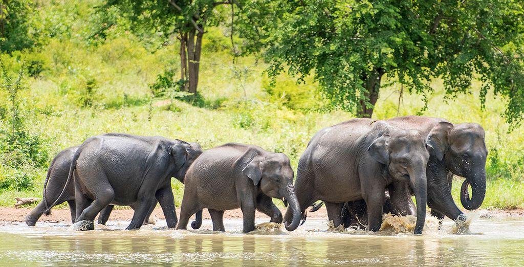 Tour privato dello Sri Lanka in famiglia da 9 o 11 notti