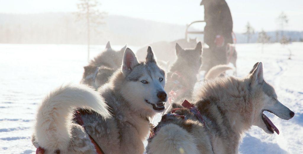 Een rit met een hondenslee