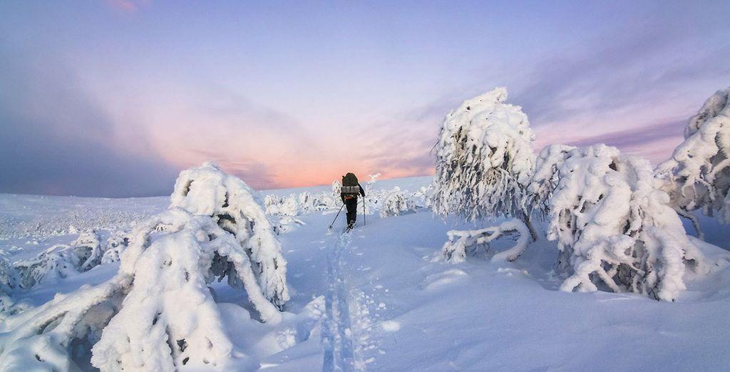Laat u betoveren door de schoonheid van de Poolcirkel in de winter