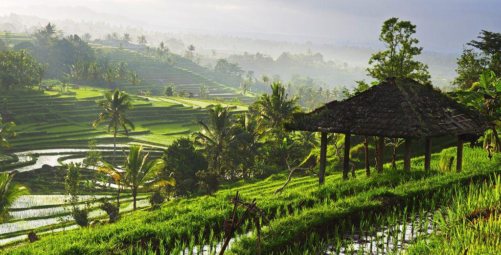 Ontdek het betoverende Ubud
