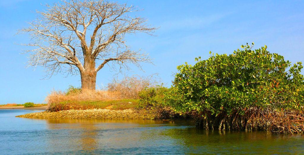 De delta van Sine Saloum
