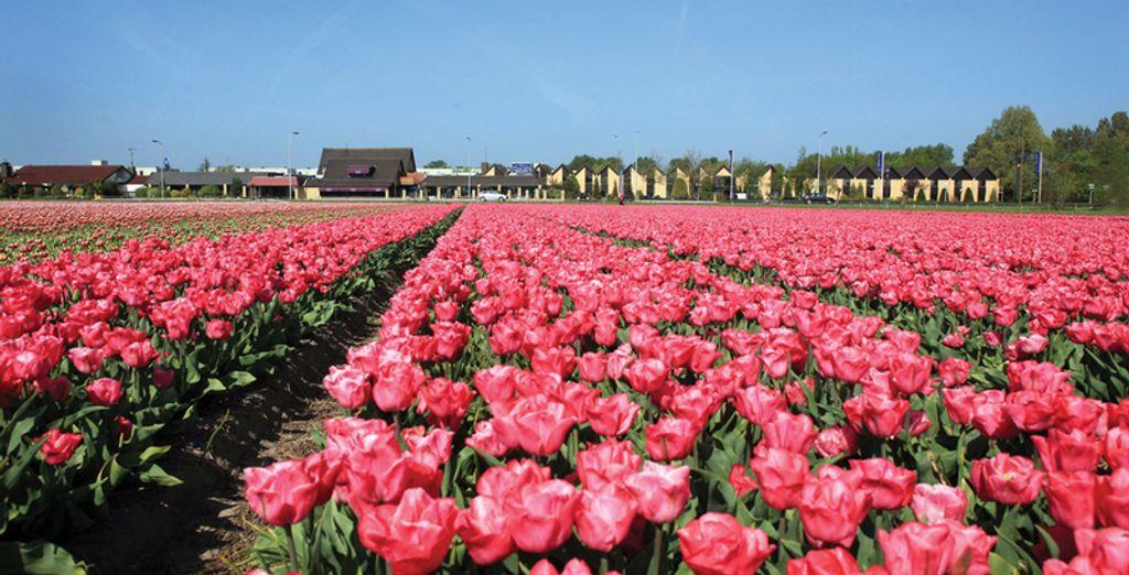 Wij nemen u mee naar Noord-Holland