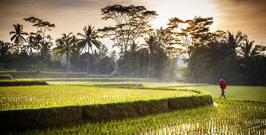 In het hart van de weelderige jungle van Ubud