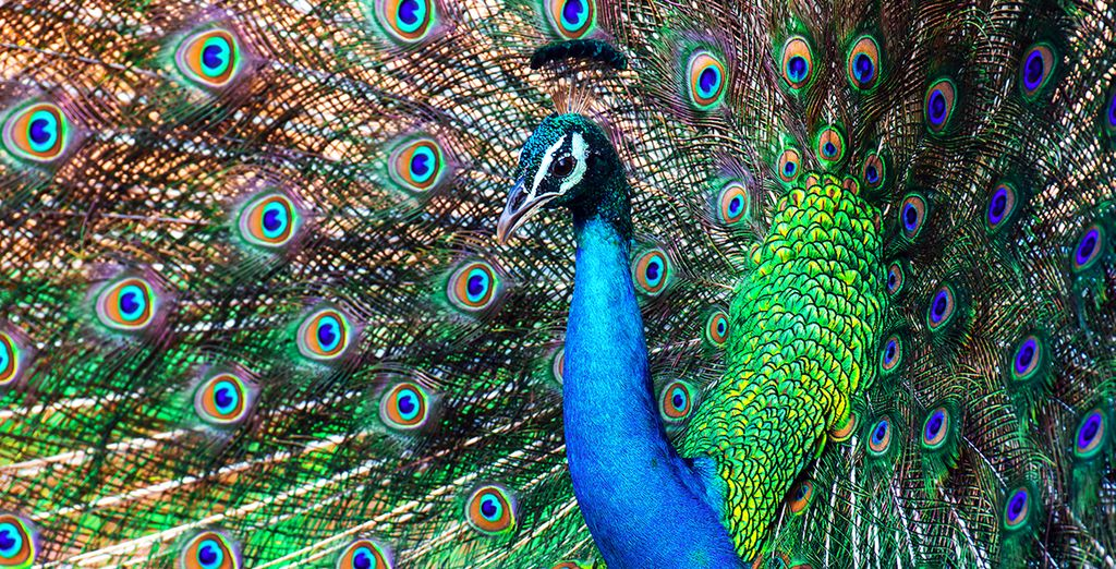 Tijdens een safari in het Yala Nationaal Park ontmoet u de kleurrijke bewoners