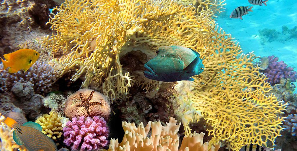 Of gaat u liever op verkenning in de onderwaterwereld?
