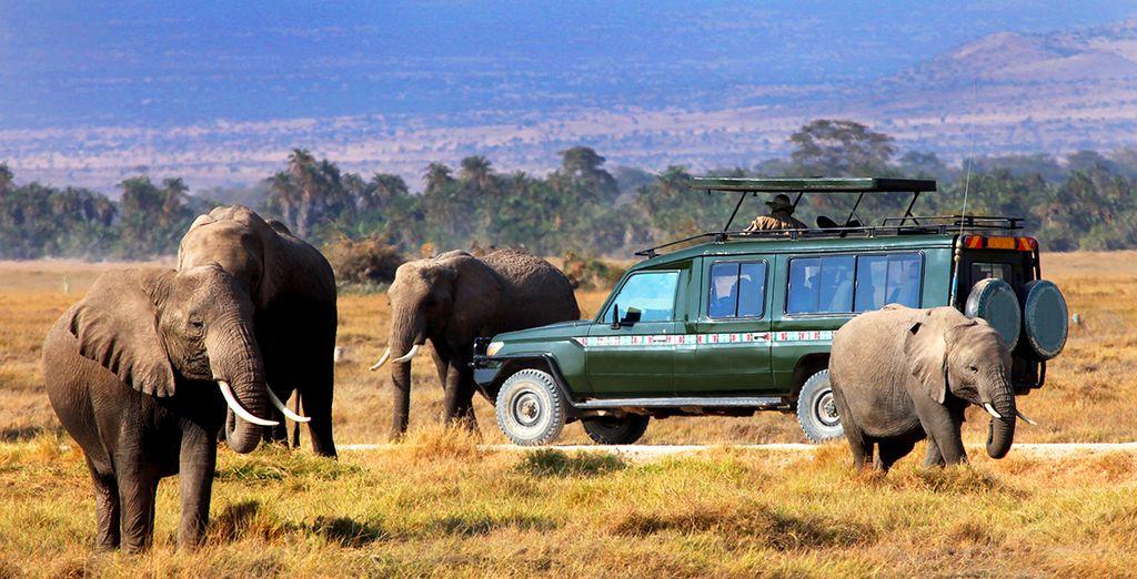 Maak vervolgens een uitzonderlijke safari