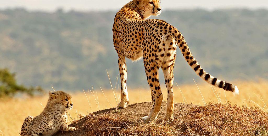 Op zoek naar wilde dieren in hun natuurlijke habitat