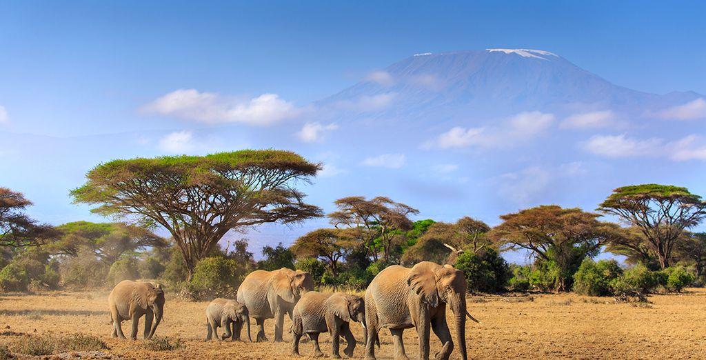 De magie van Amboseli