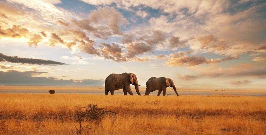 Ontdek het wildlife van Kenia