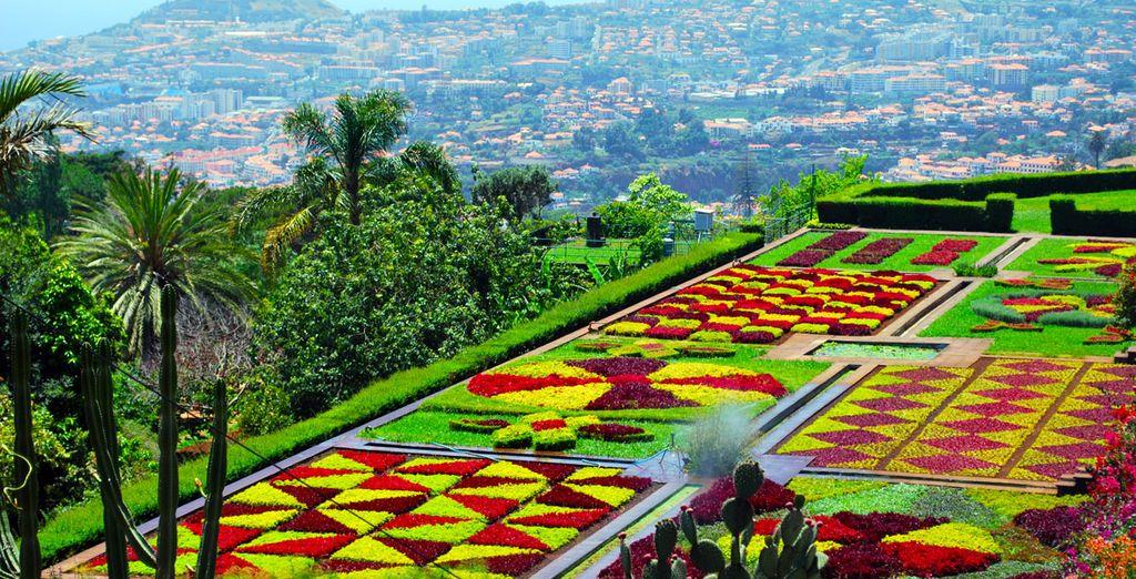 Take a stroll through Funchal's lush gardens...