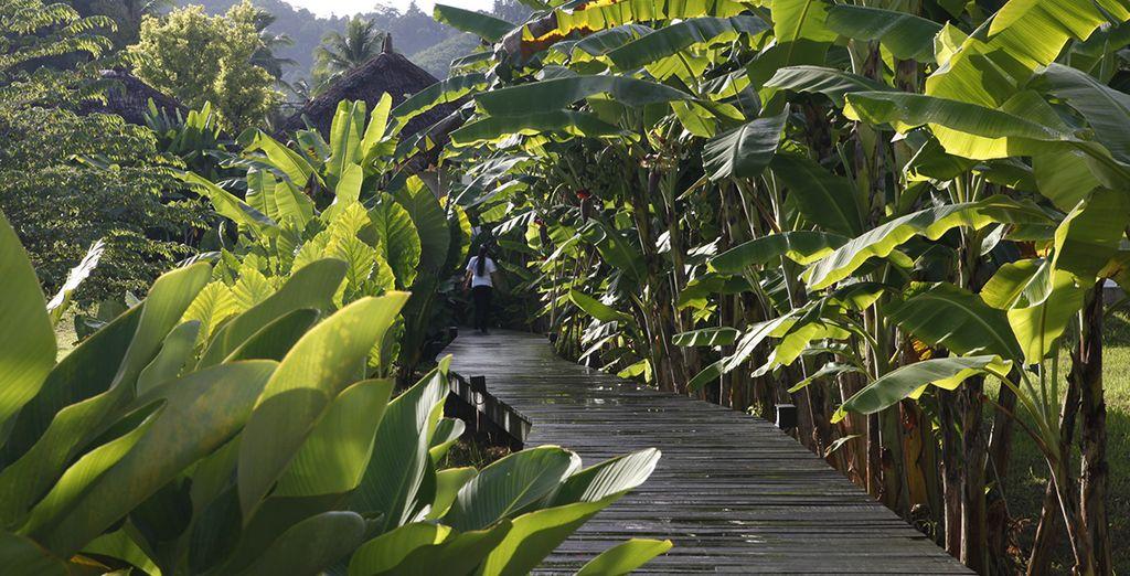 Stroll through the lush gardens