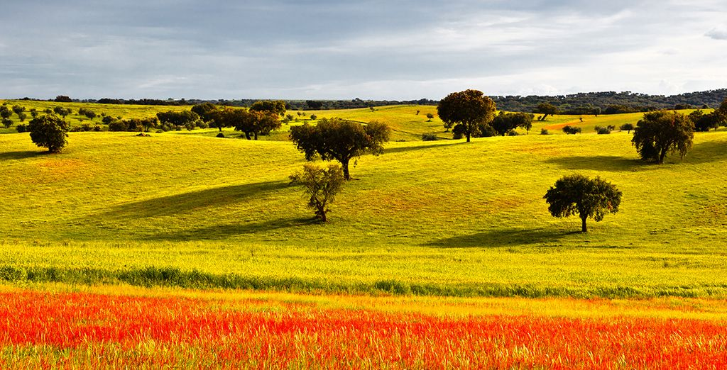 Nestled in the center of Vila Viçosa in the heart of Alentejo, an authentic and largely unexplored region of Portugal