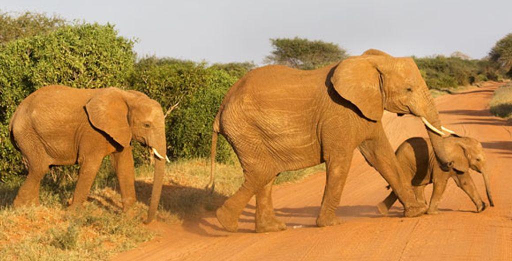 - Ol Seki Hemingways Mara & Ibo Lodge***** - Kenya and Mozambique  Various