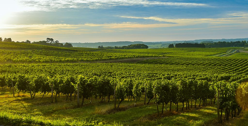The surrounding area has an abundance of vineyards...