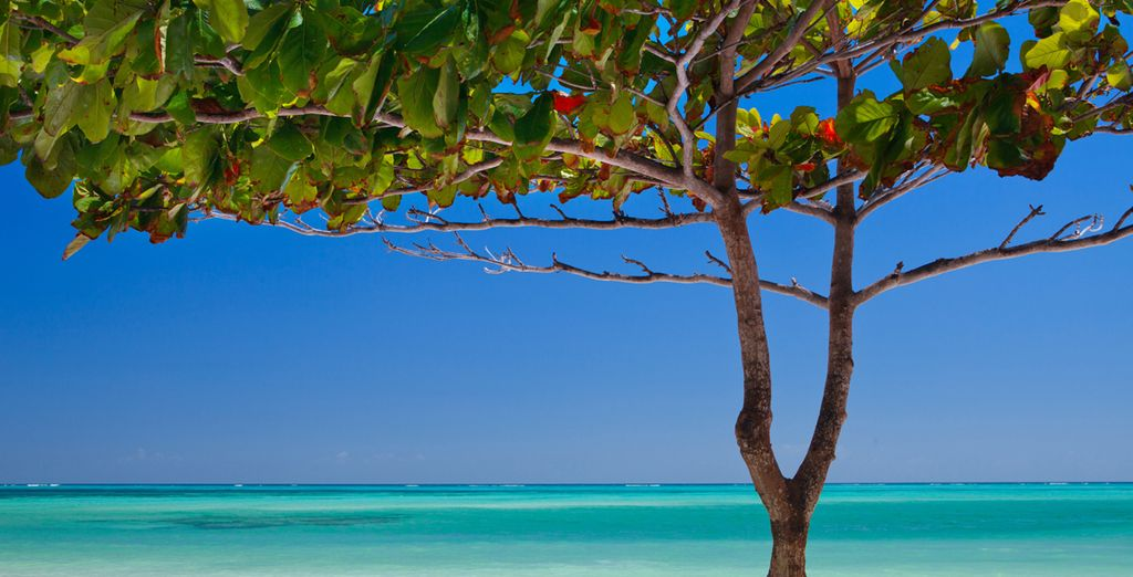 And relish the beaches of this Spice Island
