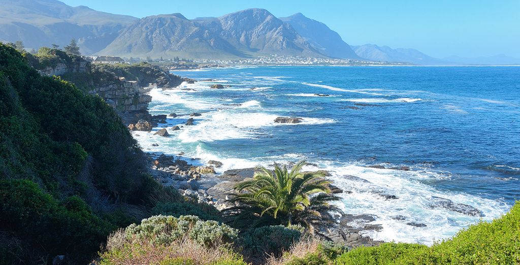And the beachside town of Hermanus