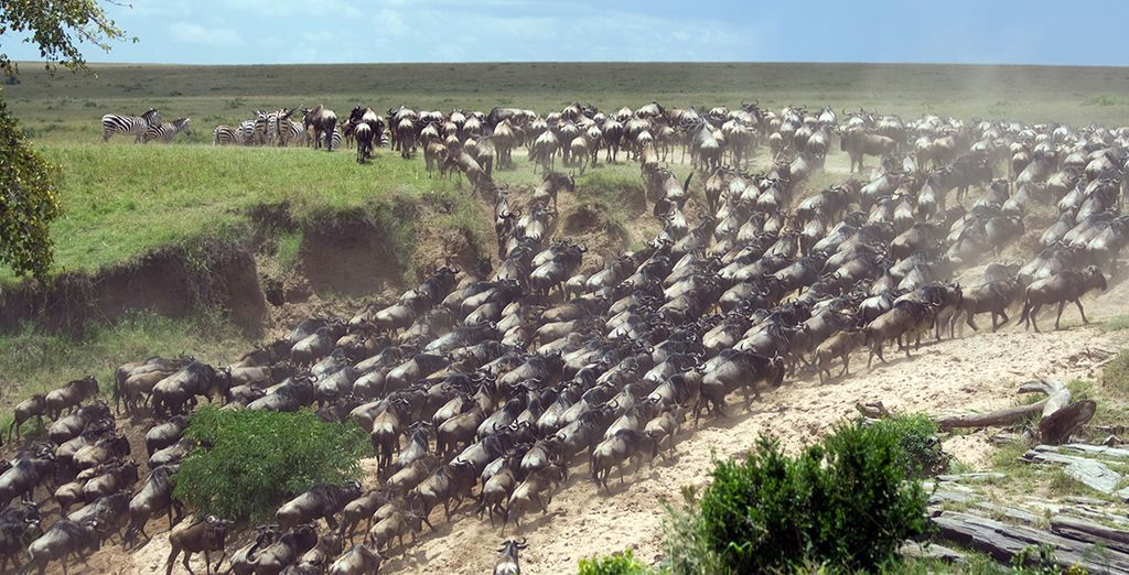 And if you're lucky, catch a glimpse of the Great Wildebeest Migration
