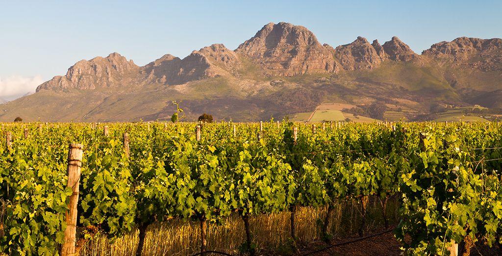 Then visit the beautiful Stellenbosch winelands