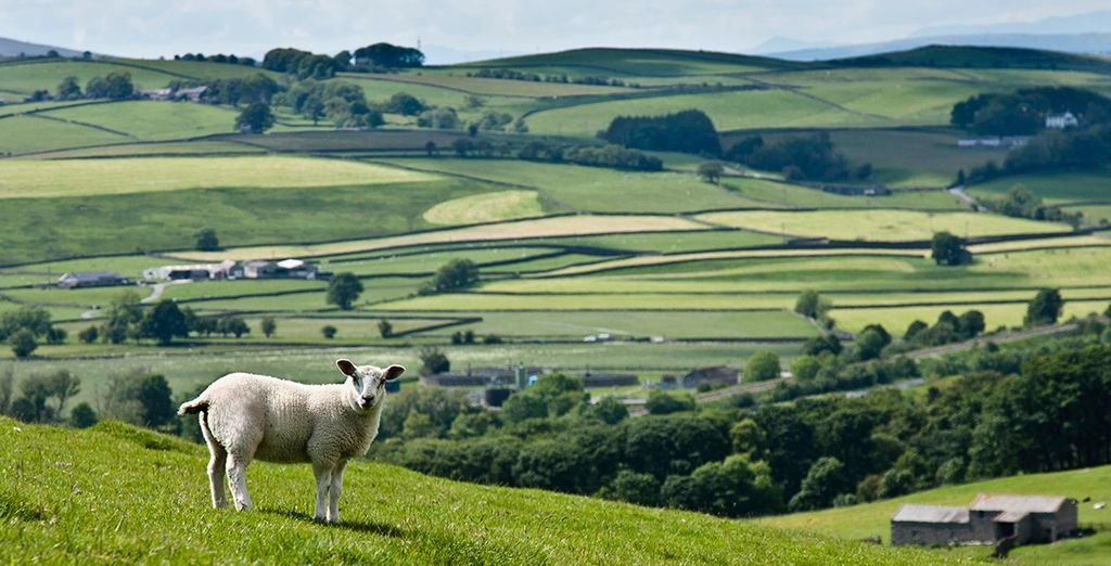 Soak up the serenity of the Yorkshire Dales countryside