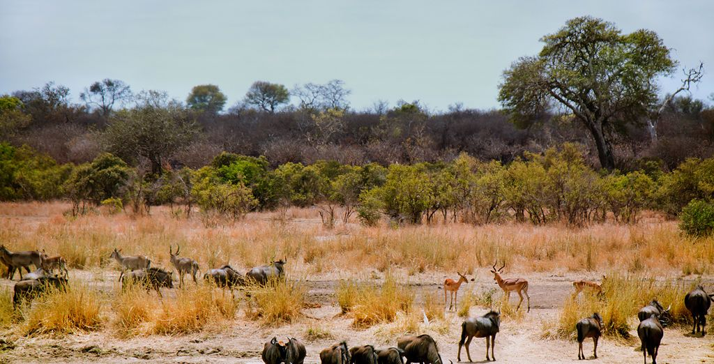 Buffalos and more, all in breathtaking surroundings