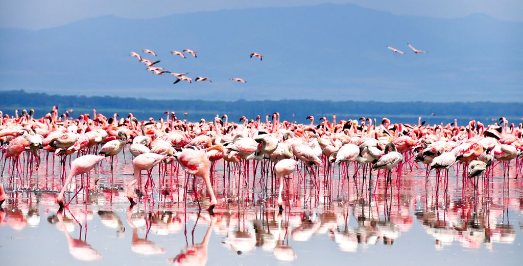 You can experience the very best of Africa's scenic majesty on this amazing trip