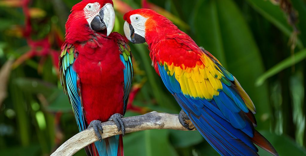 You can reconnect with nature at Bali bird park...