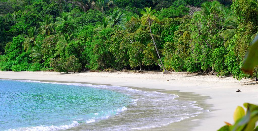 And the pristine, palm-fringed beaches of Manuel Antonio