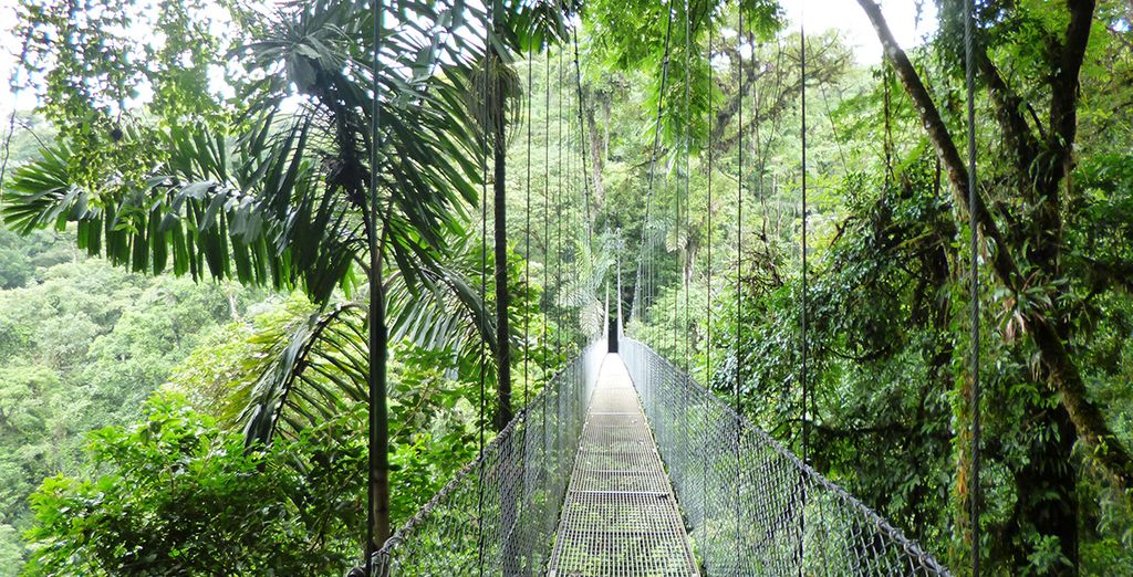 As you enjoy walks in the jungle canopy...
