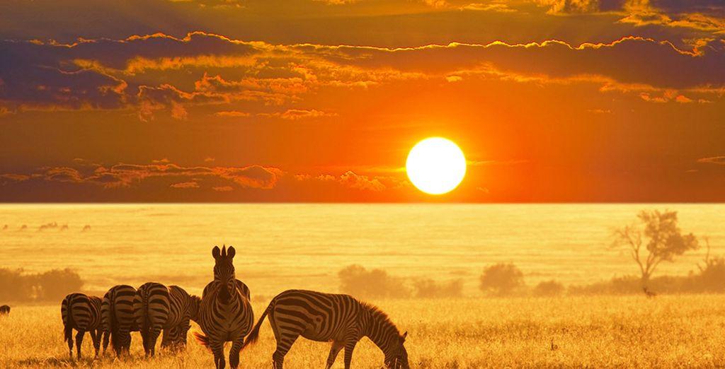 And the abundant wildlife in Etosha National Park
