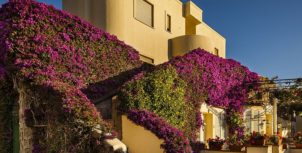 fragrant scents of bougainvillea