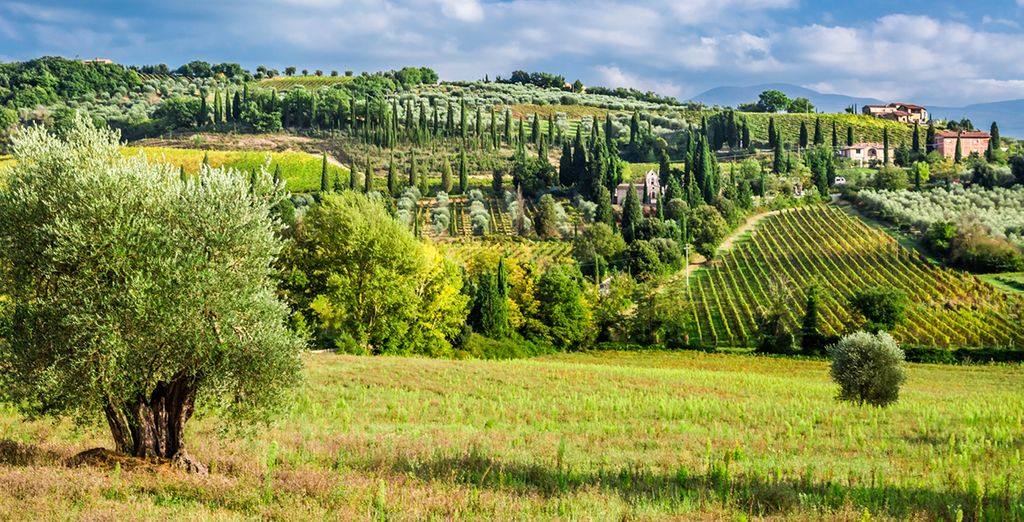 Venture into the rolling hills of vineyards