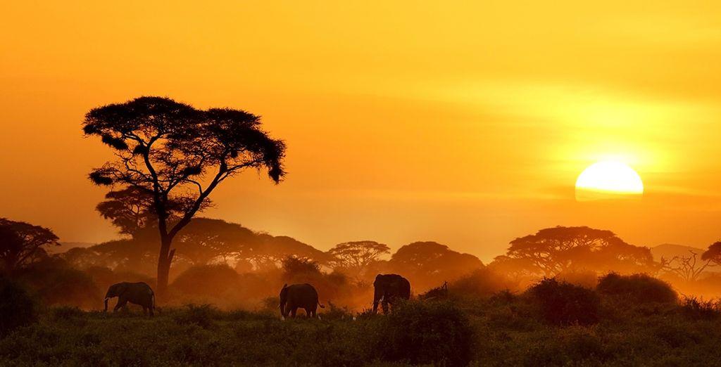 Embark on a magical beach and safari stay