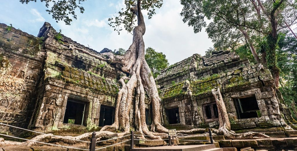 And Ta Prohm where historic buildings are embraced by the roots of enormous fig trees