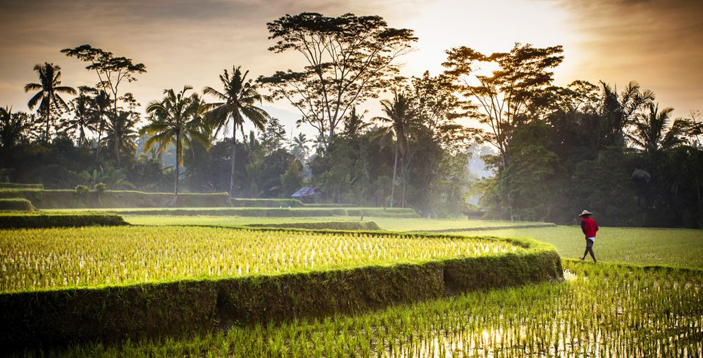 At the heart of the lush Ubud jungle...