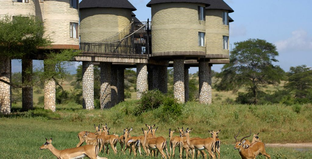 You will be staying in the heart of the action (pictured: Sarova Salt Lick Lodge)