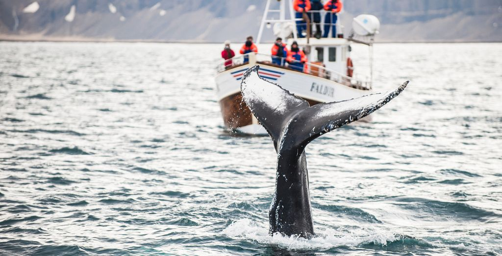or a boat trip for sighting whales, orcs and dolphins (weather permitting)