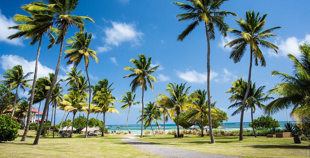 Where sea views peak through swaying palms