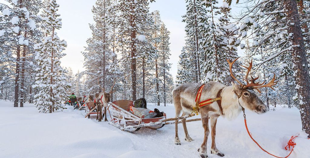 Discover the Wonders of Finland