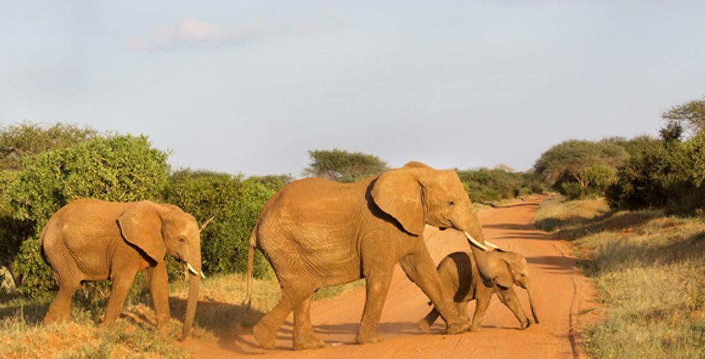 - Ashnil Mara Camp***** & Travellers Club Hotel**** - Masai Mara Game Reserve - Mombasa - Kenya Various