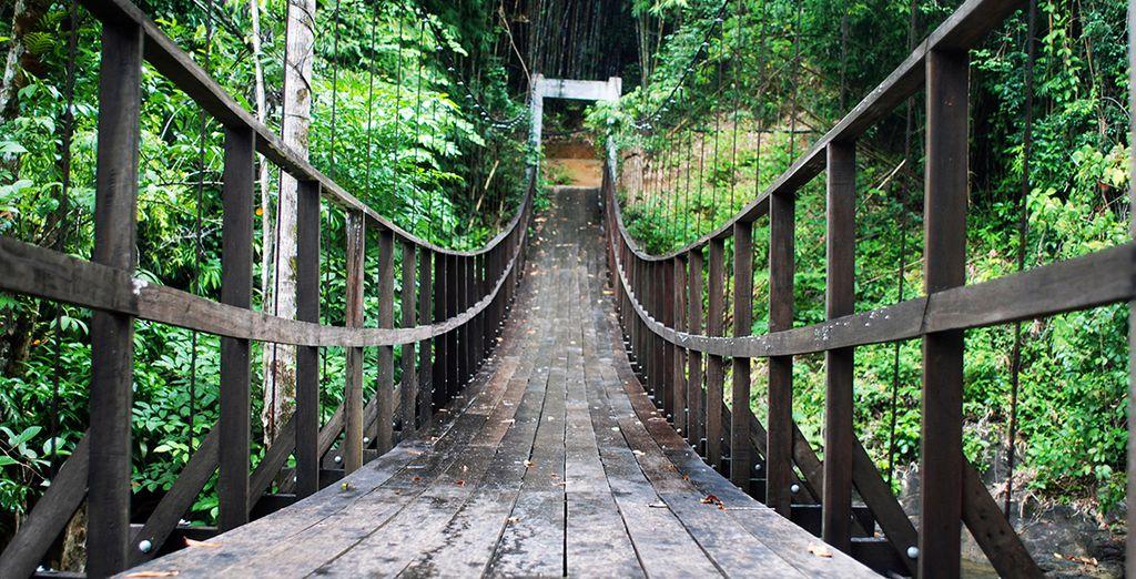 Or trek through the rainforest of Khao Lak National Park