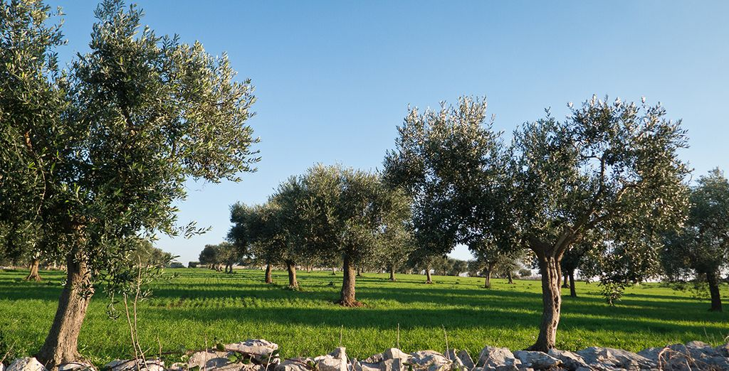 Explore beautiful Puglia
