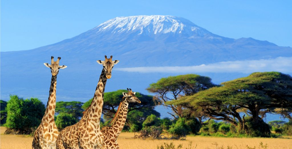 Experience Kenya's Wildlife with Voyage Privé